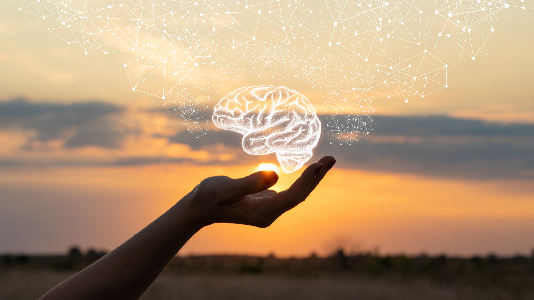 The Brain and Mediation -Blog Southwestern HR Consulting